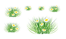 Set Of Spring White Flowers With Yellow Centers. Daisies In The Green. Vector Collection