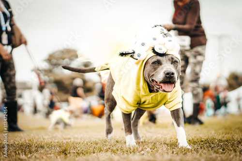 Photo Funny dogs dressed in costumes.