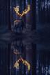 Hirsch mit Feuer Geweih im dunklen Wald