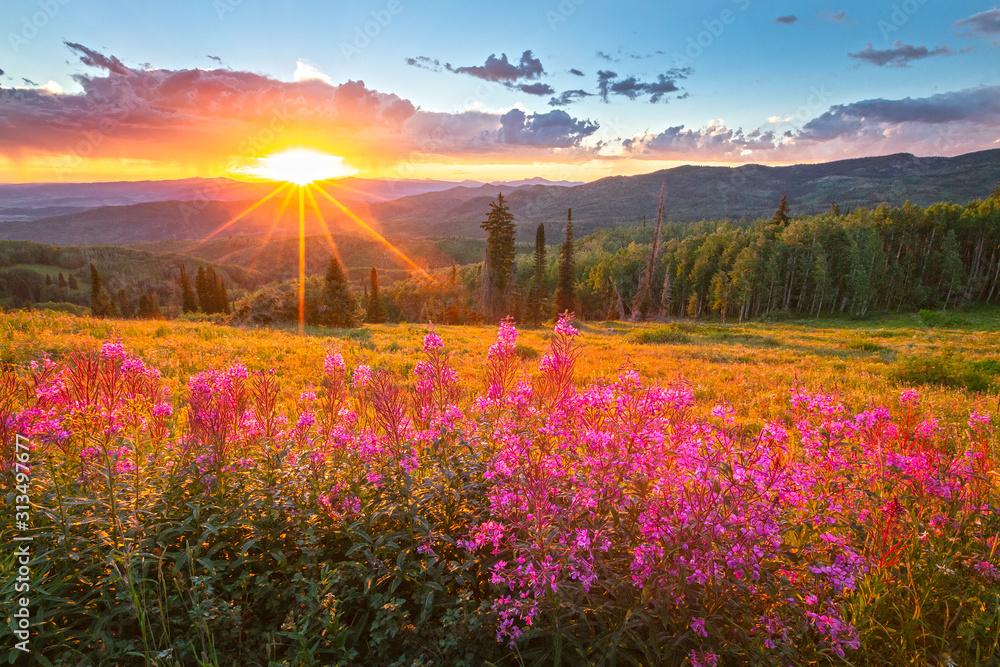 Fototapeta Wildflower sunset in the Colorado Rockies, USA.