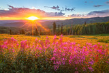 Fototapeta  - Wildflower sunset in the Colorado Rockies, USA.
