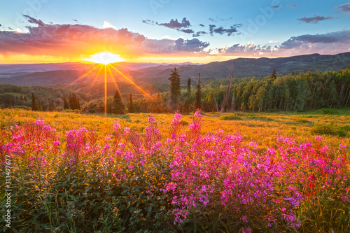Wildflower sunset in the Colorado Rockies, USA. - 313497677