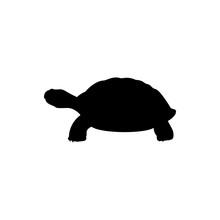 Vector Illustration Of Turtle