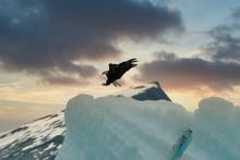 Landing Bald Eagle, Tracy Arm
