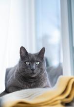 Gray Cat Relaxing On Window