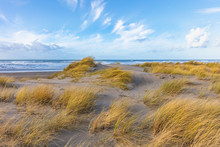Beach Grass Blowing In The Wind On The Oregon Coast