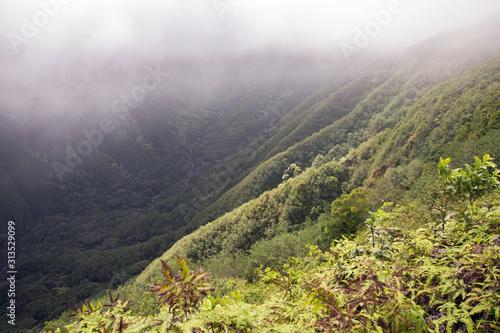 Obraz na płótnie Lush green canyon landscape with steep walls
