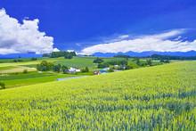 初夏の北海道、美瑛町...