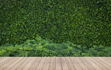 Wood Flooring In A Green Plant...