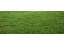 Fresh Green Grass Lawn Isolate...