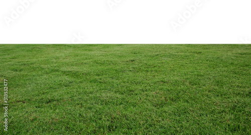 Cuadros en Lienzo fresh green grass lawn isolated on white background