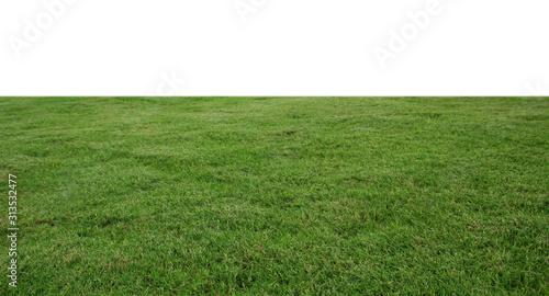 Obraz fresh green grass lawn isolated on white background - fototapety do salonu
