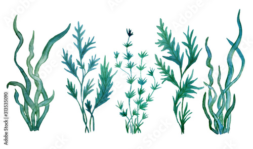 watercolor hand drawn illustration green blue water seaweed algae marine food la Canvas Print