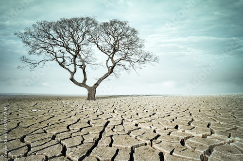 big tree on drought land Tableau sur Toile