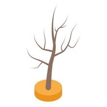 Tree In Desert Icon. Isometric...