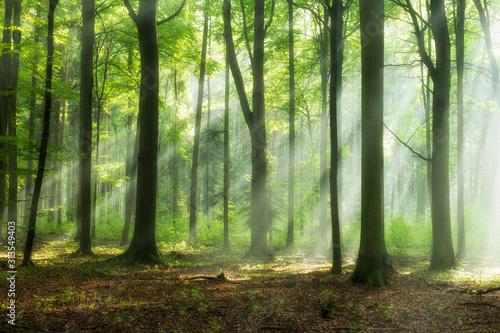 Tapety 3D  piekny-poranek-w-lesie