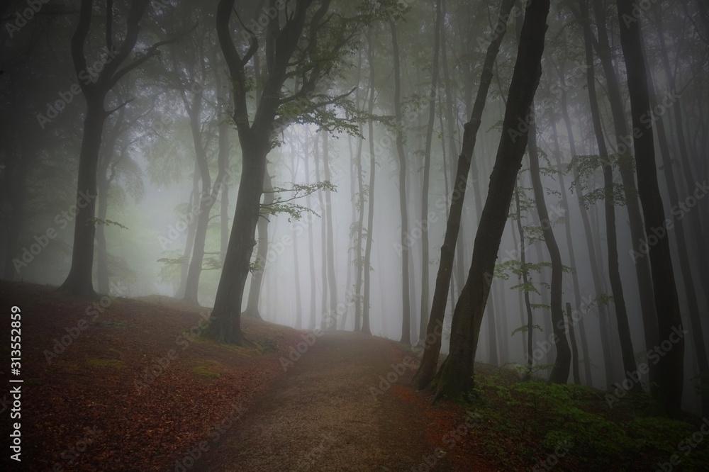 Fototapeta Nebel in einem herbstlichen Wald mit Buchen