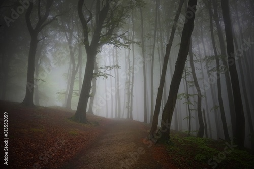 Obraz Nebel in einem herbstlichen Wald mit Buchen - fototapety do salonu