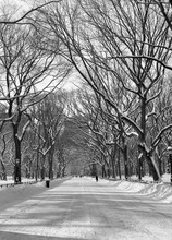 A Black And White Winter View ...