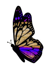 butterfly with color gradient in the wing