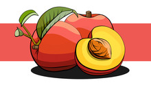 Vector Illustration Of Peach Fruits On White And Red Line.