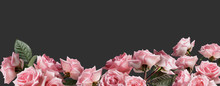 Pink Roses Bouquets Isolated O...