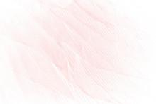 Beautiful Line Soft Pink Feath...