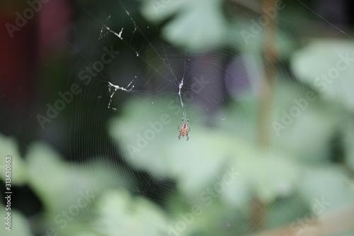 Pajęcza sieć z pająkiem