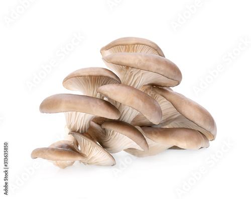 Photo Oyster mushroom isolated on white background