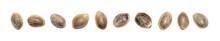 Close Up Of Hemp Seeds In A Di...