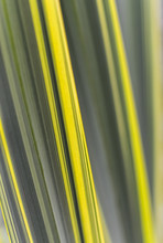 Yellow Green Plant Leaves Background
