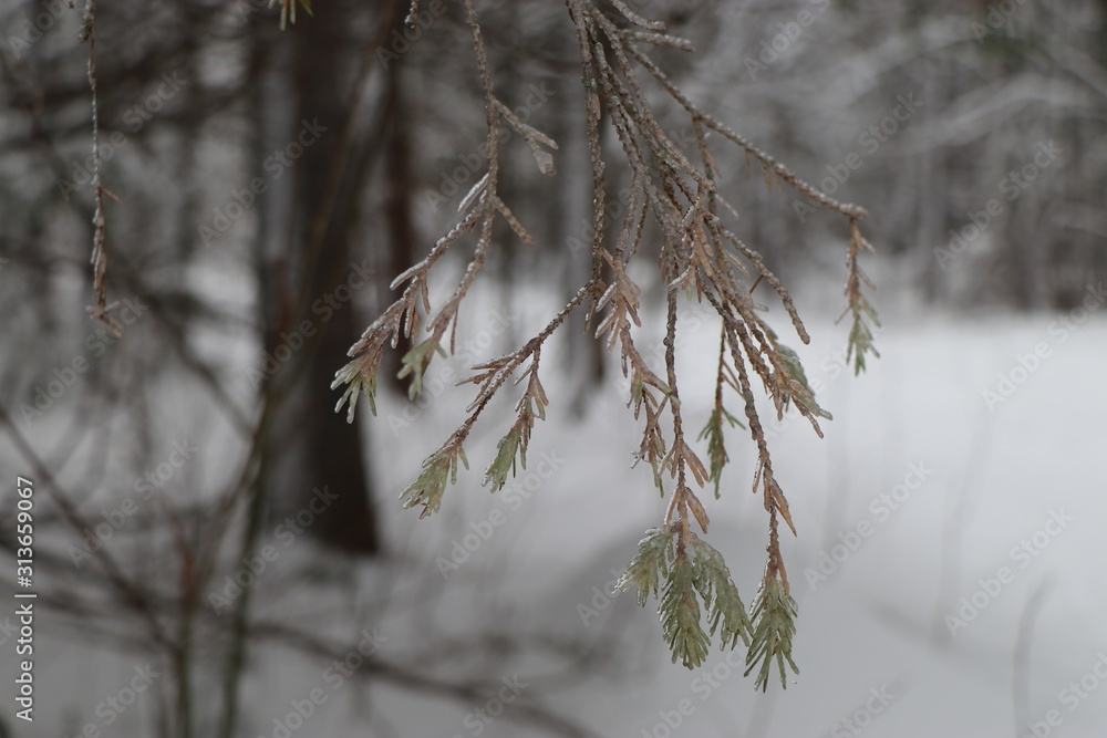 branch of a tree in winter