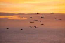 Birds Flying In The Sunrise Sky