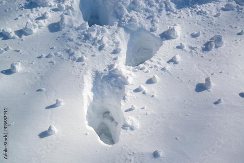 Obraz na plátně  雪原の足跡