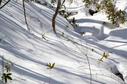 雪原と自然 Tablou Canvas