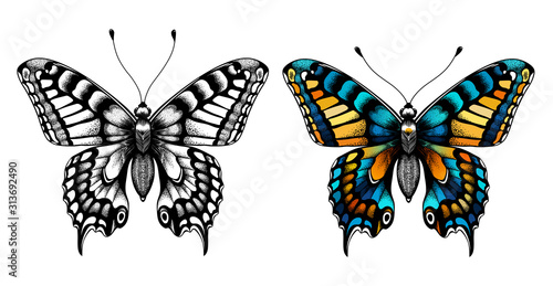 Fotografie, Tablou  Two butterflies. Kids Coloring Page.