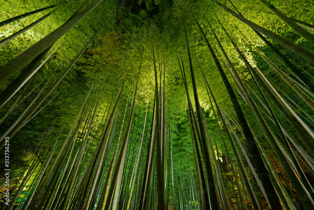 Bamboo grove, bamboo forest in Arashiyama, Kyoto, Japan