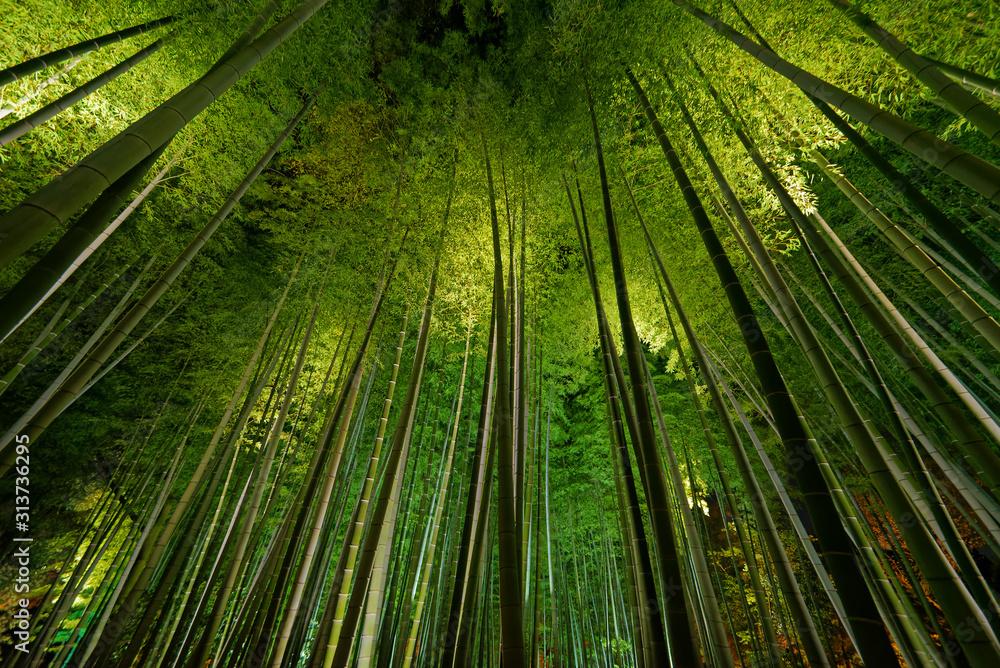 Fototapeta Bamboo grove, bamboo forest in Arashiyama, Kyoto, Japan