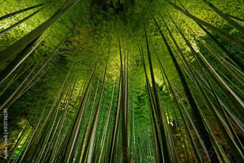 Fototapeta Bamboo grove, bamboo forest in Arashiyama, Kyoto, Japan obraz