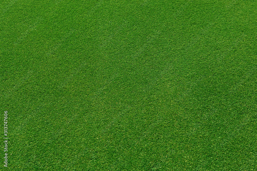 Fototapeta  top view of real green grass background