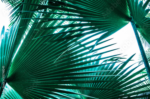 tropical palm leaf and shadow, abstract natural green background, dark blue tone #313748245