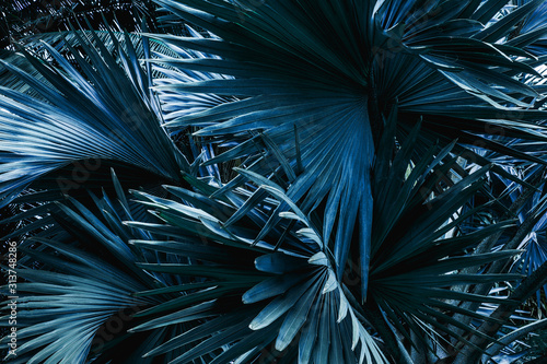 tropical palm leaf and shadow, abstract natural green background, dark blue tone #313748286