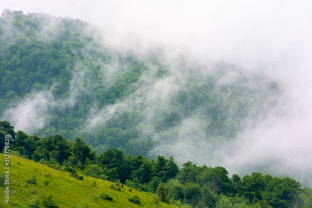 clouds rise above the forested forest