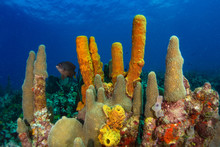 Colorful Corals, Sponges And S...
