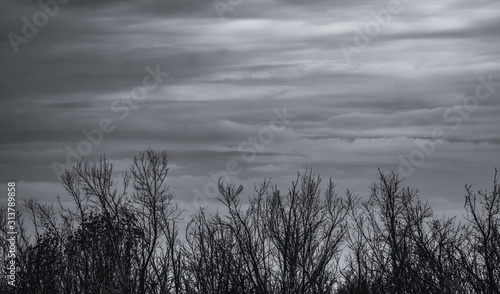 Canvas Print Silhouette dead tree on dark sky and gray clouds background for sad, death, grief, and lament