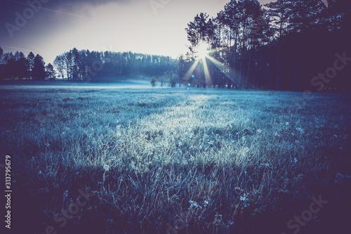 Obraz closeup frosty grass, morning on meadow near forest, light effects of dawn sun - fototapety do salonu