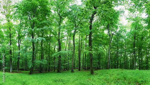 Obraz Zielony las - fototapety do salonu