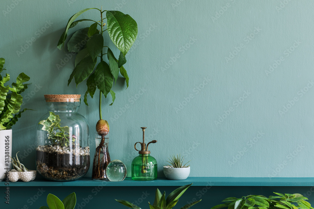 Fototapeta Stylish living room interior with beautiful plants in differents hipster and design pots on the green shelf. Green wall. Modern and floral concept of home garden jungle. Template. Copy space.