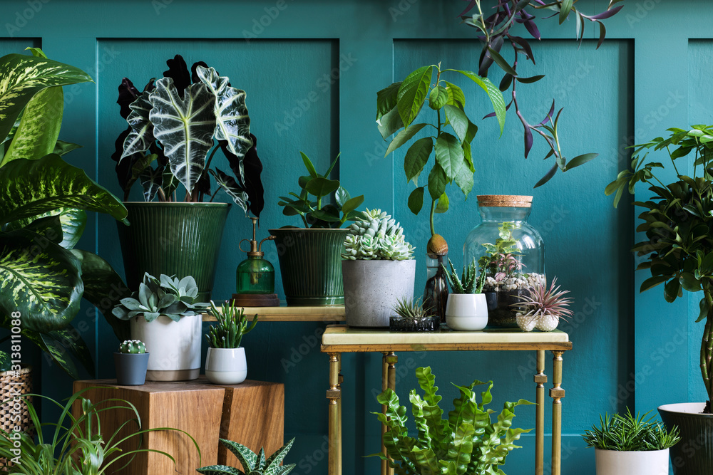 Fototapeta Stylish composition of home garden interior filled a lot of beautiful plants, cacti, succulents, air plant in different design pots. Green wall paneling. Template. Home gardening concept Home jungle.