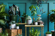 Leinwandbild Motiv Stylish composition of home garden interior filled a lot of beautiful plants, cacti, succulents, air plant in different design pots. Green wall paneling. Template. Home gardening concept Home jungle.